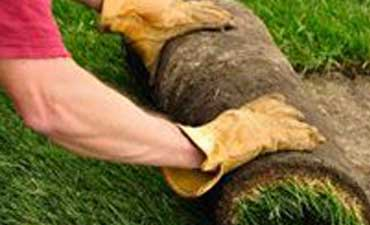 Grass sod - Big Easy Landscaping