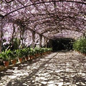 pergolas for the garden - Big Easy Landscaping