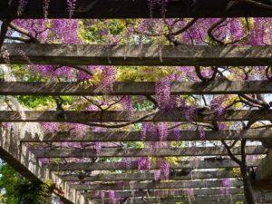 New Orleans pergola - Big Easy Landscaping