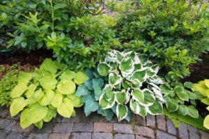 garden plants - Big Easy Landscaping