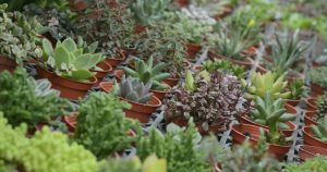 potted plants - Big Easy Landscaping