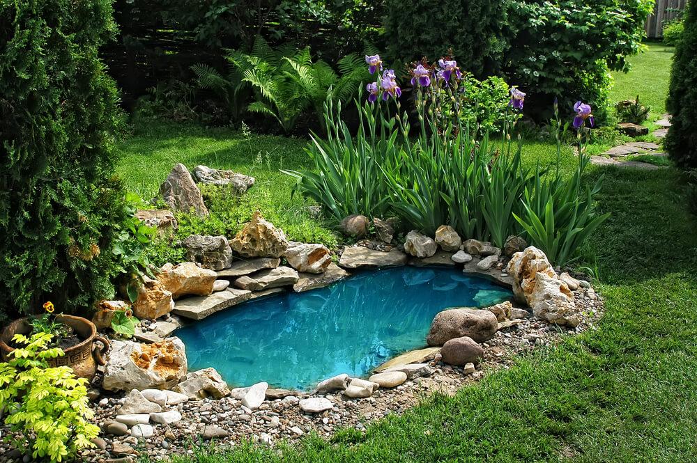 Garden Pond New Orleans