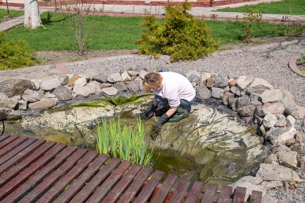 Garden Pond Maintenance