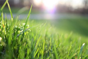 best lawn care practices new orleans