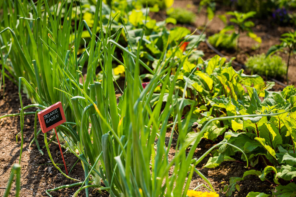 edible garden design